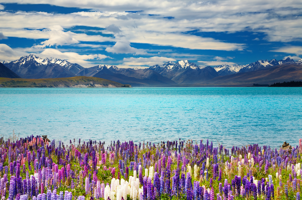 Why You Should Visit New Zealand At least Once